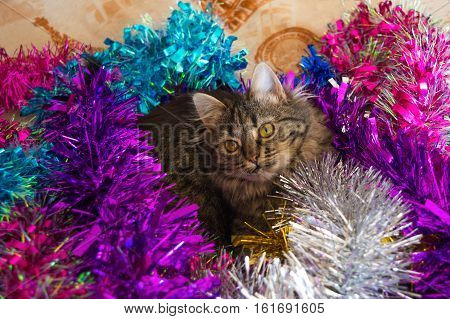 Cat Lying In The Colorful Tinsel.