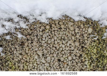 winter stone texture covered with snow snow background in wintertime, winter framework for postcard