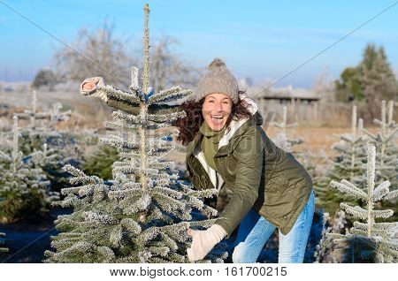Laughing Joyful Woman Selecting A Christmas Tree