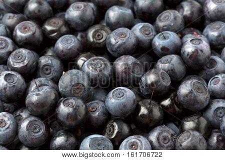 Organic blueberry background culinary  culinary  organic blue