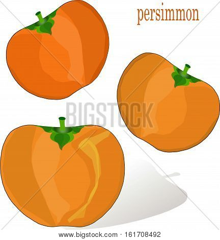 Hand drawn painting orange persimmons on white, stock vector illustration