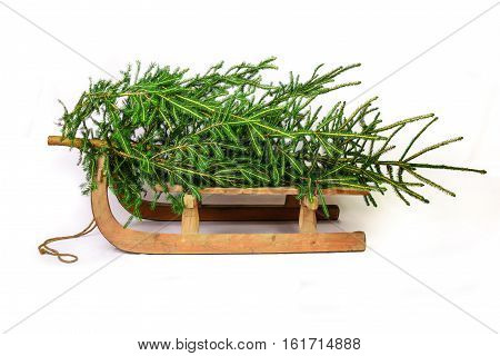 Christmas tree on a old wooden sledge isolated on white background