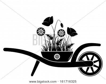 vector wheel barrow with corn poppies and cornflowers in pot isolated on white background