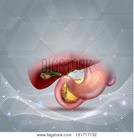 Stones In The Gallbladder And Anatomy Of Other Surrounding Organs Abstract Light Grey Background Wit