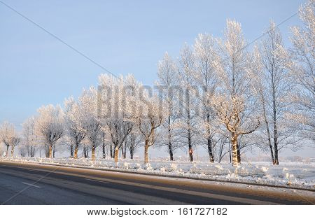 Snow-covered trees along the road. Empty road. Winter.