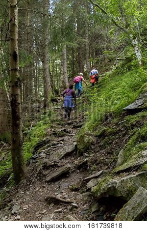 NORDFJORDEID, NORWAY - JULY 5, 2016: A group of tourists climbing up the mountain through the forest thicket.