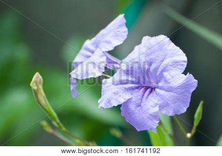 Selective focus on the light purple flower, low key photo