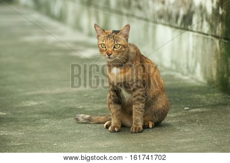 Selective focus on colorful cat on the floor
