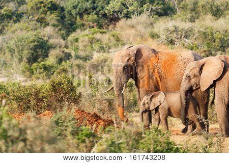 Sand Bath Time For The Elephant Family