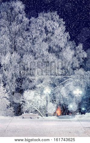 Winter night landscape - bench under winter trees in winter night park with falling snowflakes, colorful winter night view of winter night deserted park