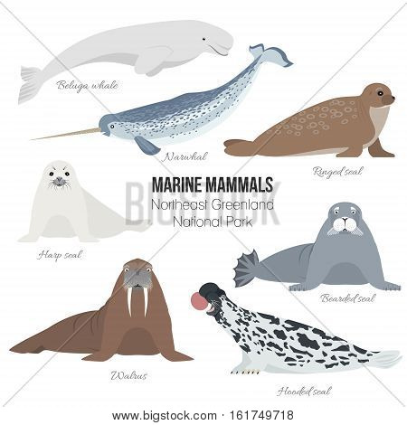 Marine mammals set of Greenland national park. Polar animals. Walrus, harp seal, narwhal, bearded seal, hooded seal, beluga whale, ringed seal