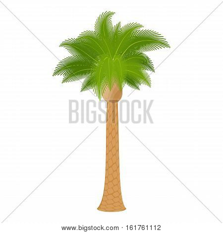 Hardwood palm icon. Cartoon illustration of hardwood palm vector icon for web