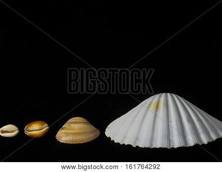 Textured Limestone Sea Shells on a Black Background