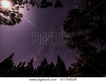Stars in the Sky at Night over the Trees of a Pine Forest