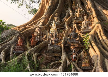 The Buddha statue Under the Bodhi Tree