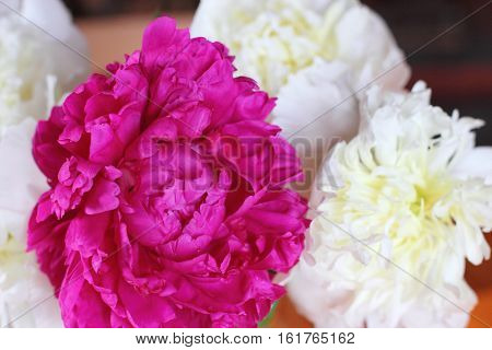 red and white peonies in a vase. Bouquet of flowers