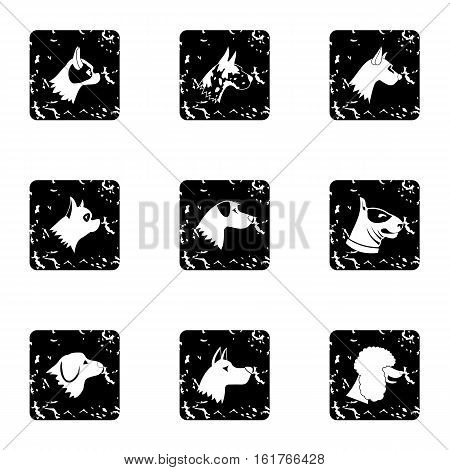 Faithful friend dog icons set. Grunge illustration of 9 faithful friend dog vector icons for web