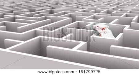 White Mouse in White maze looking over walls