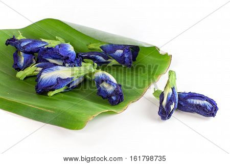 Butterfly pea tea Anchan Dried flowers to make tea on white background
