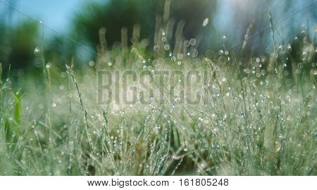 Bright Sunlight Green Grass Meadow Suitable For Backgrounds Or Wallpapers,