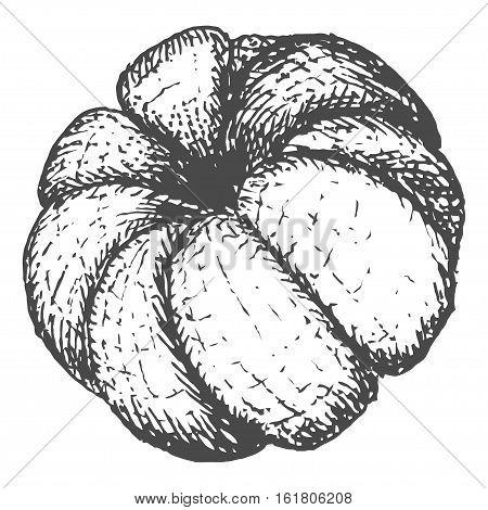 Hand drawn vector illustration of orange mandarine fruit isolated