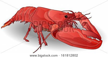 Crayfish Coocked Isolated