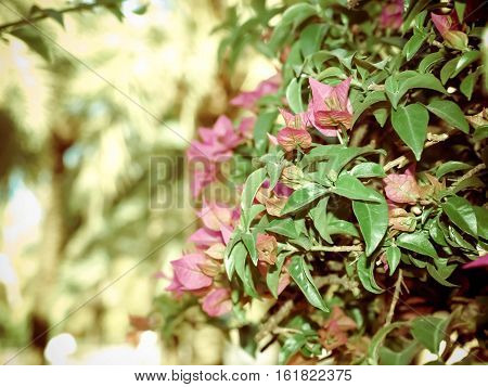 Purple Flowers On A Background