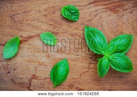 Fresh Sweet Basil Leaves On Shabby Teak Wood Background. Sweet Basil Leafs With Flat Lay. Food Ingre