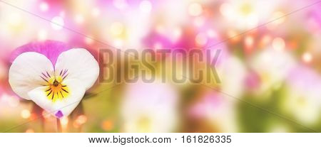 Spring background with detail of a colorful pansy in heart shape for a Postcard