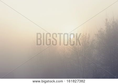 The trees in the mysterious mystical mist. Mood, sadness, apathy, and uncertainty. Landscape