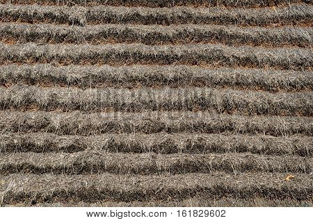 Close up of thatched roof texture of old country house