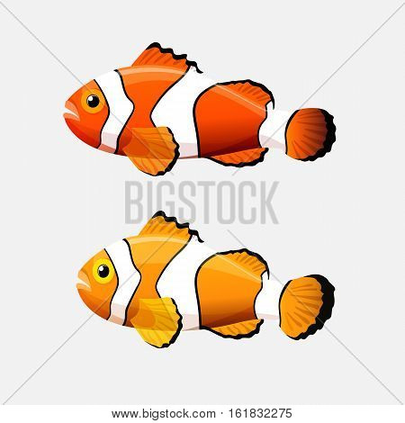 Anemone fish isolated on white. Clownfish or anemonefish are fishes whose habitat usually is a coral reefs. Yellow and orange color species with white bars or patches. Aquarium. Vector illustration