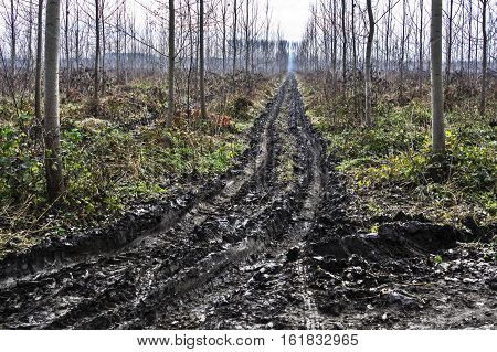 The road through the woods and mud.
