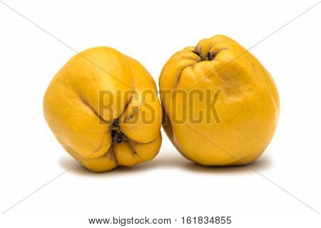 Quince fruit. Salubrious ripe yellow quince fruit