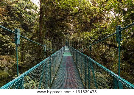 Suspended bridge over the canopy of the trees in Monteverde Costa Rica Central America