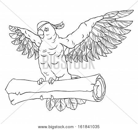 Pirate parrot in flight with outstretched wings and the coin in his paws. Cockatoo. Vector illustration isolated on white background. Coloring page