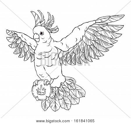 Pirate parrot in flight with outstretched wings, eye patch and a card or letter in his paws. Cockatoo. Vector illustration isolated on white background. Coloring page