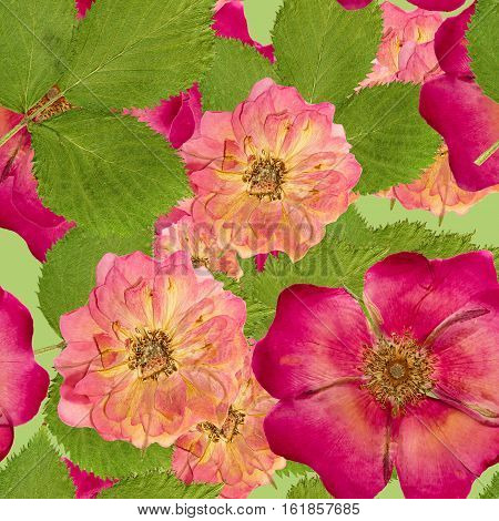 Briar wild rose dog-rose brier canker-rose eglantine. Colorful texture of pressed dry flowers. Seamless pattern for continuous replicate. Beautiful photo collage.