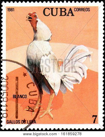 CUBA - CIRCA 1981: A stamp printed by Cuba shows the Cock Blanco, from the series Fighting Cocks