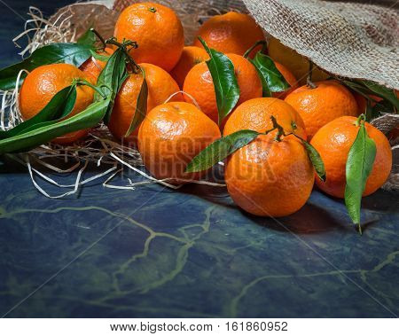 Fresh picked mandarins spilling from a burlap sack close-up.Horizontal format with copy space.