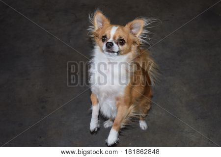 a dog stands and looks up expectedly