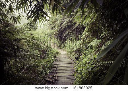 Path In The Jungle. Sinharaja Rainforest In Sri Lanka.