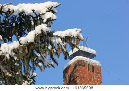 Pine Tree with Fresh Snow with backside of town house