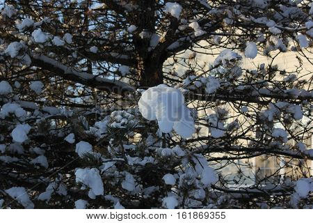 Fresh white snow on trees with town home in background