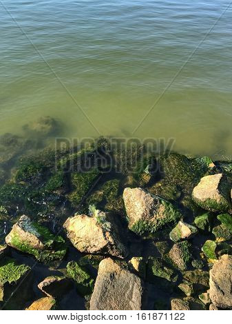 green algae growing on rocks in the bay
