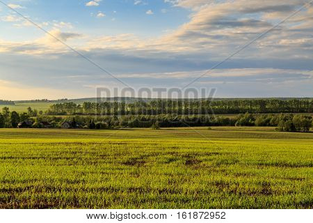 Spring Landscape, A Field With Wheat Seedlings