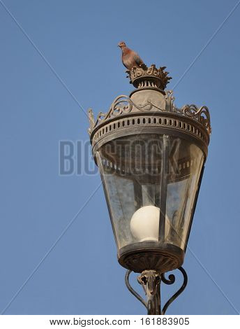 The bird is the pigeon sitting on a decorative lantern. Egypt Africa.