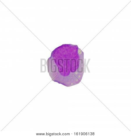 Blood cells on white background.medical science background