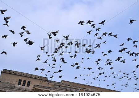 Flock of flying pigeons with calming and relaxing blue sky and some clouds