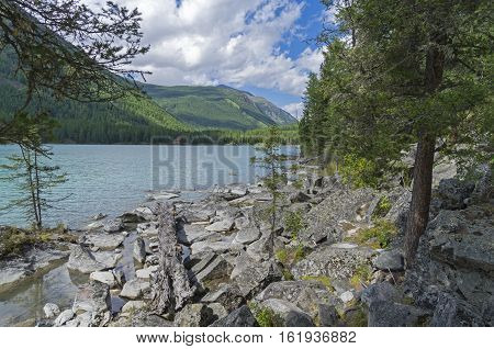 Log on the lake shore. Kucherla lake. Altai Mountains Russia. Sunny summer day.